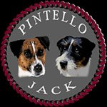 Allevamento Jack Russell Terrier
